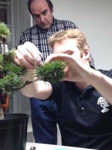 bonsai-greffe2
