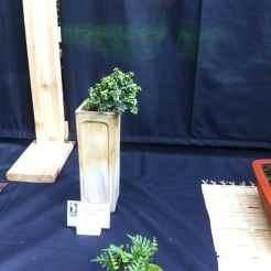 Buxus Mircophylla Compacta - Jacques Guyon